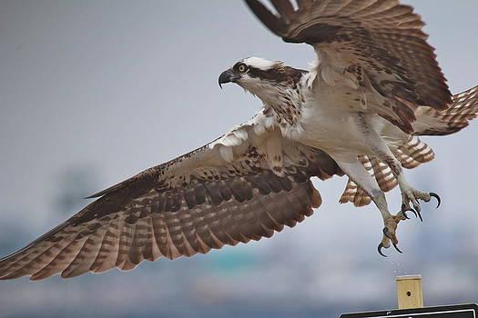 Burst Into Flight by Gene Alderson