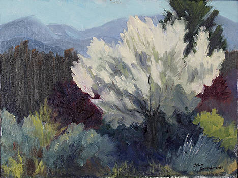 Burst of Taos Spring by Julia Grundmeier