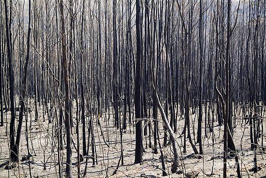 Tim Hester - Bush Fire