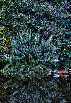 Isaac Silman - Bush Reflection
