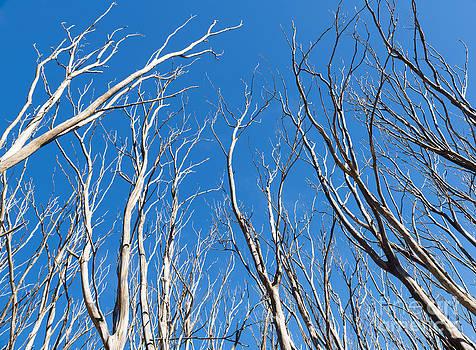 Tim Hester - Bushfire Trees