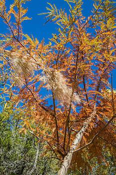 Bushy Bluestem and Bald Cypress by Steven Schwartzman