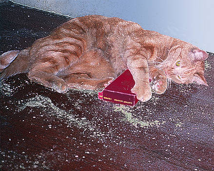 Buster Slopped-out on Catnip by Alice Ramirez
