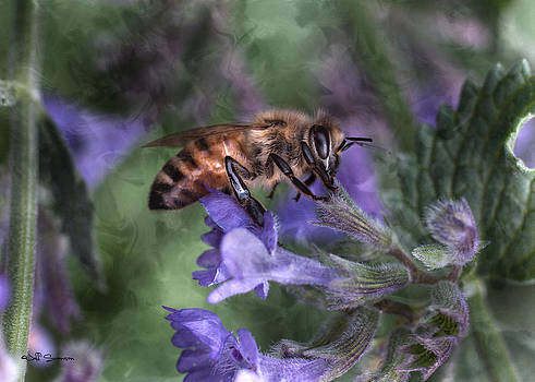 Busy As A Bee by Jeff Swanson