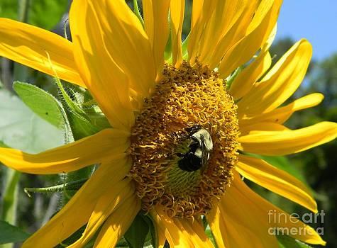 Busy Bee in a Sunflower by Joanne Askew