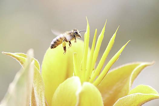 Busy bee by Luna Curran