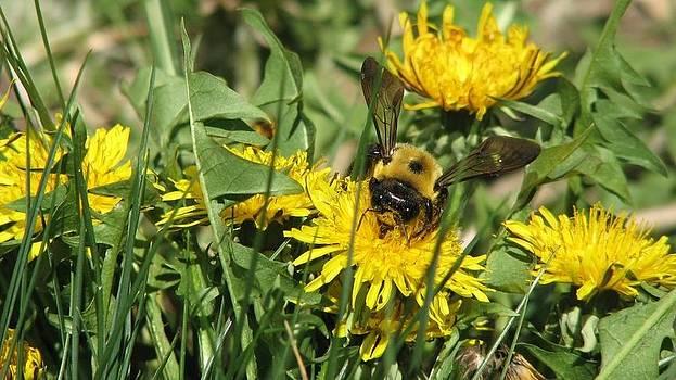 Busy bee by Megan Hughes