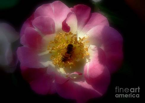 Diana Besser - Busy Bee on Rose