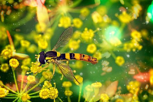 Zoran Buletic - Busy Bee