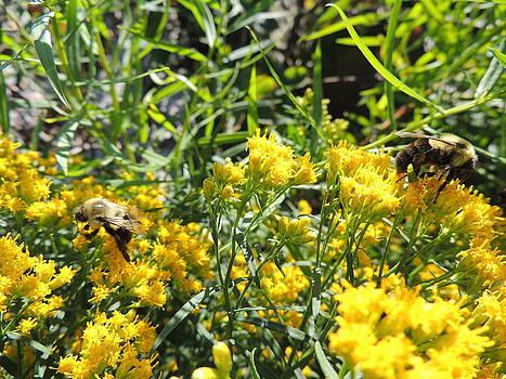 Anastasia Konn - Busy Bees