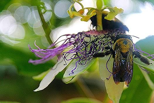 Busy Bees by Sarah E Kohara