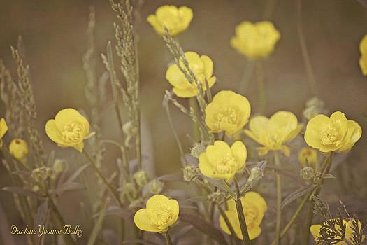 Darlene Bell - Buttercup Flowers
