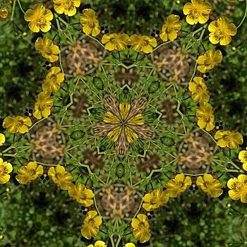 Valerie Kirkwood - Buttercup Kaleidoscope