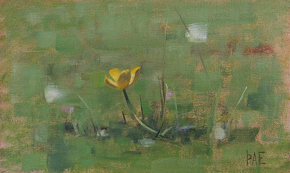 Buttercup by Thorgrimur Andri Einarsson