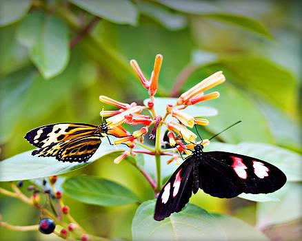 Butterflies 15 by Walter Herrit