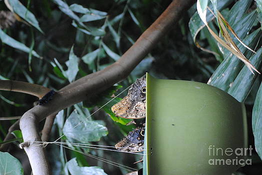TChamberlin Photography - Butterflies and a Basket