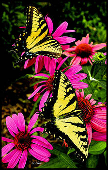 Butterflies And flowers by James C Thomas