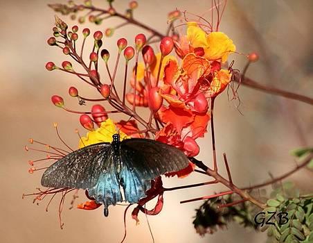 Butterflies are Free by Ken  Myers