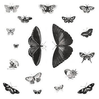 Butterflies by Gina Dsgn
