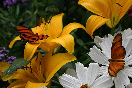 Jane Girardot - Butterflies Landing