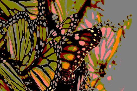 Butterflies by Meganne Peck