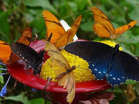 Butterfly Mix by Nelin Reisman