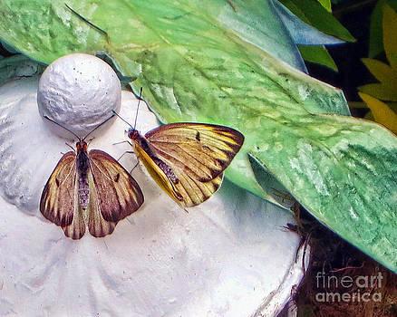 Butterflies by Nora Martinez