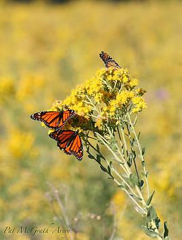 Butterflies by Pat McGrath Avery