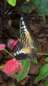 Butterfly 1 by Chance Jobe