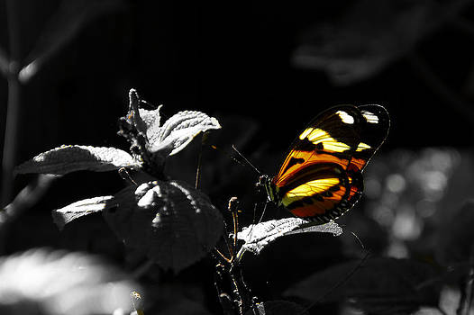 Butterfly-1 by Fabio Giannini