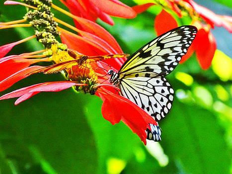 Butterfly #1 by Nelin Reisman
