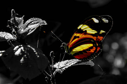 Butterfly-2 by Fabio Giannini