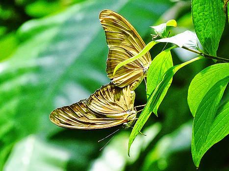 Butterfly #2 by Nelin Reisman