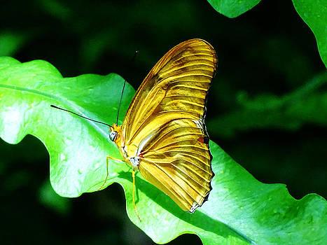 Butterfly 5 by Nelin Reisman