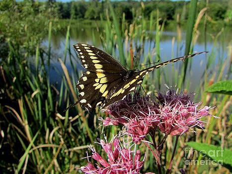 Scott B Bennett - Butterfly an Flower