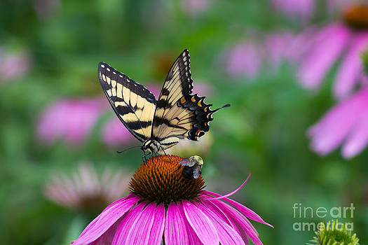 Butterfly and Bee by Deb Kline