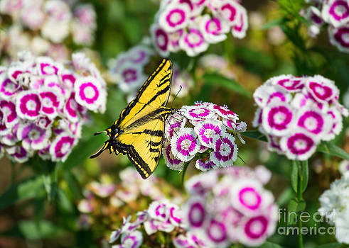 Jamie Pham - Butterfly and Blooms - Spring flowers and tiger swallowtail butterfly.