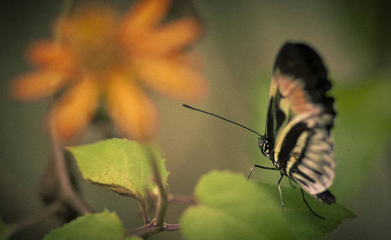 Butterfly And Flower by Bradley R Youngberg