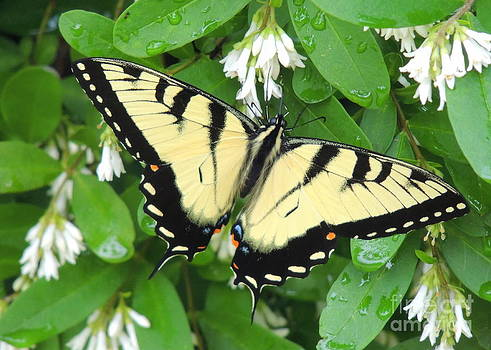 Butterfly and Flowers by Pamela Rivera