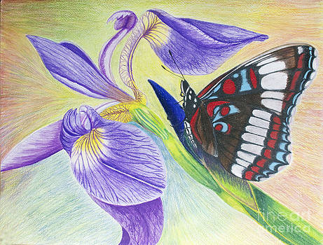 Butterfly and Iris by Cecilia Stevens