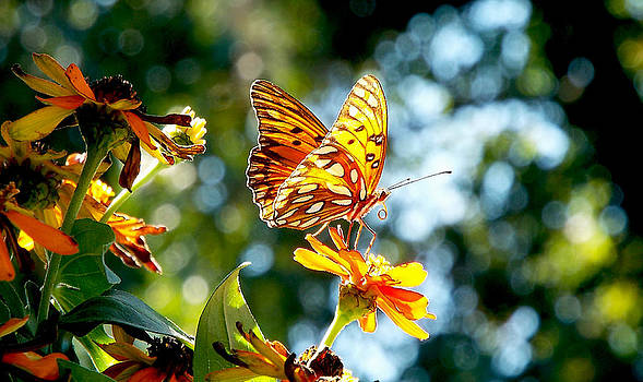 Butterfly and Zinnia by Dawn  Gagnon