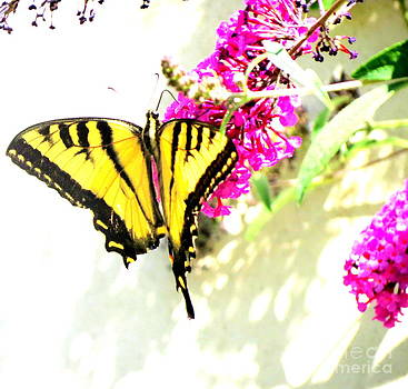 Butterfly art by Jodie  Scheller