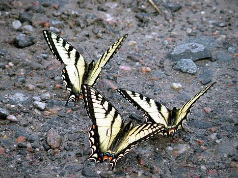 Nicole Daniels - Butterfly Ballet