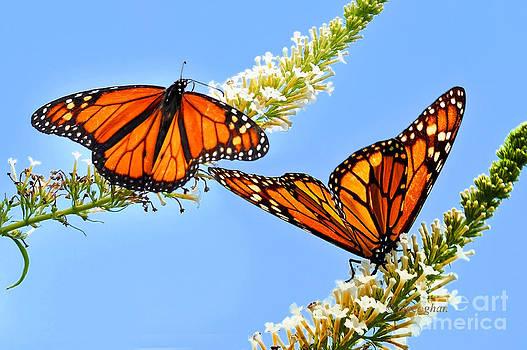 Regina Geoghan - Butterfly Ballet