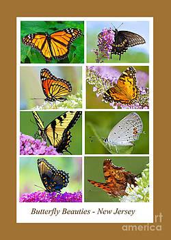 Regina Geoghan - Butterfly Beauties Poster