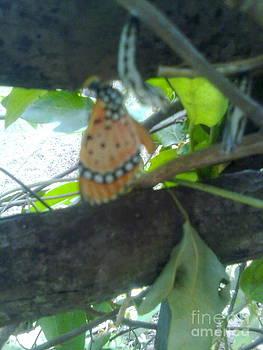 Butterfly birth time by Bgi Gadgil