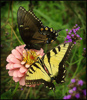 Butterfly Bliss by James C Thomas