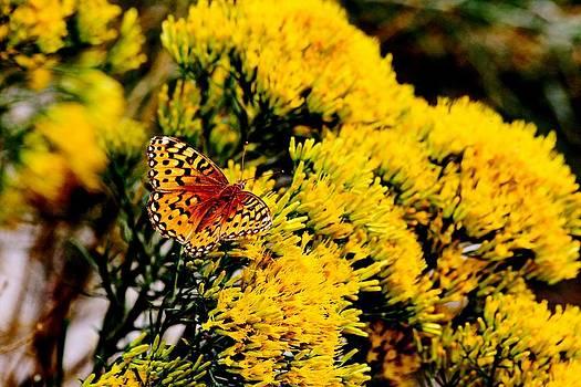 Butterfly bliss by Rebecca Adams