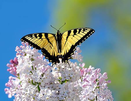 Lara Ellis - Butterfly Bouquet