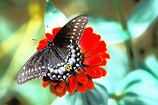 Butterfly by Brad Fuller